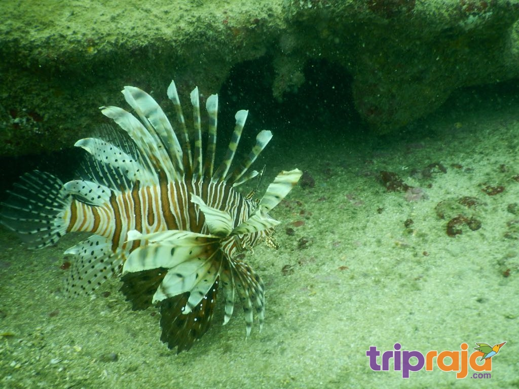 Amazing Scuba diving - tripraja.com
