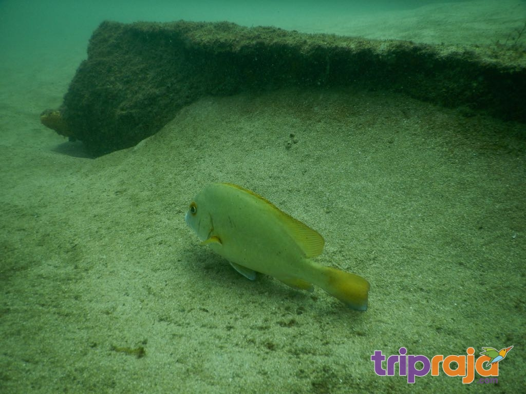 Under water Scuba dive - tripraja.com