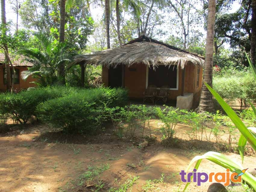 Cottages-at-Natures-Nest-Resort---tripraja.com
