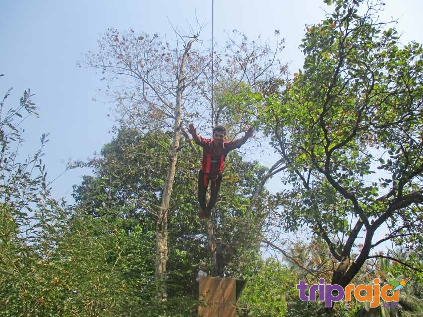 Flying-Fox-Activity-at-Natures-Nest-Resort--tripraja.com