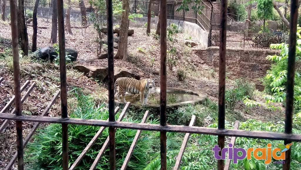 Bondla wildlife sanctuary - an animal & Nature lover's favorite
