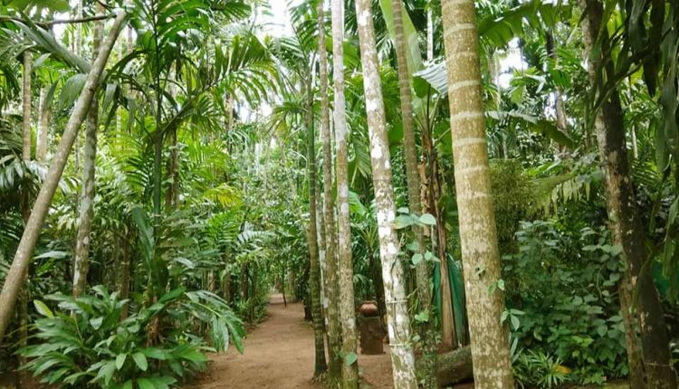 Spice-Plantation-tour-guide-goa