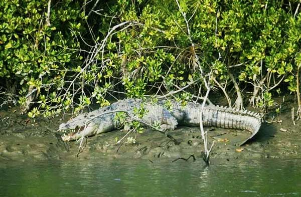 Crocodile and Bird Watching Trip Goa