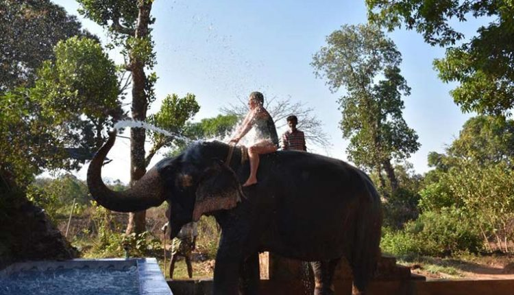 Elephant-Shower-at-Sahakari